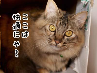 cat1601