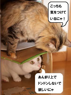 cat1602