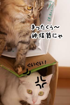 cat1603
