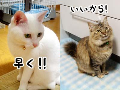 cat1608