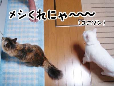 cat1609