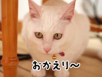 cat1615