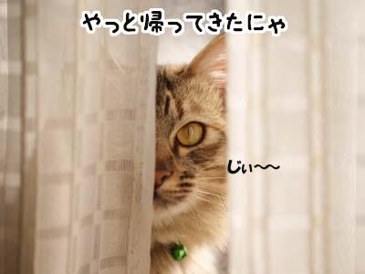 cat1616
