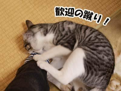 cat1617