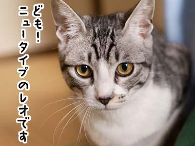 cat1618