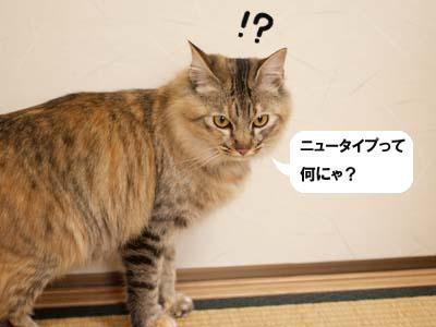 cat1619