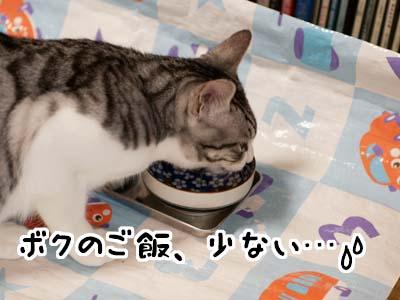 cat1622