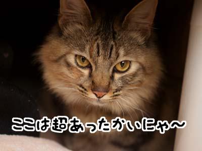 cat1623