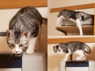 cat1625