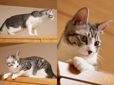 cat1626