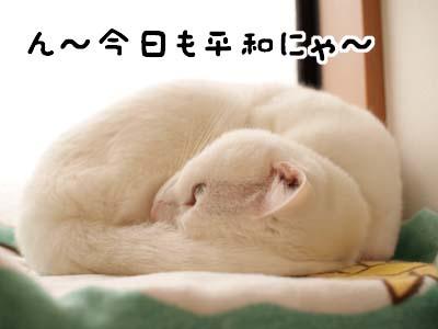 cat1628