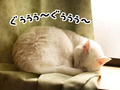 cat1629