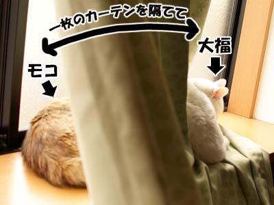 cat1631