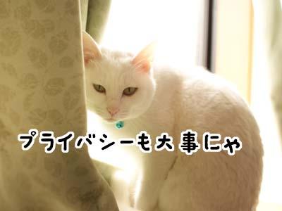 cat1632