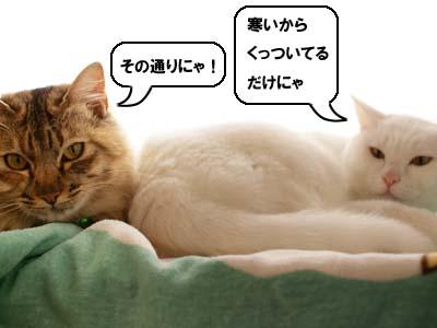 cat1638