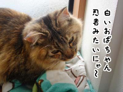cat1643