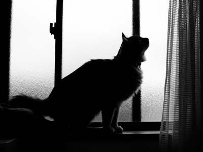 cat1644