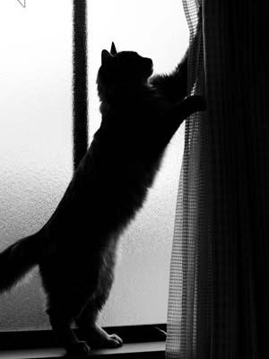 cat1645