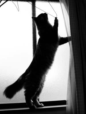 cat1646