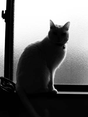 cat1647