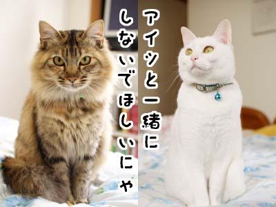 cat1648