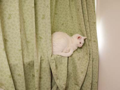 cat1649