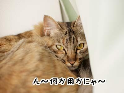 cat1650