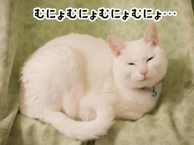 cat1651