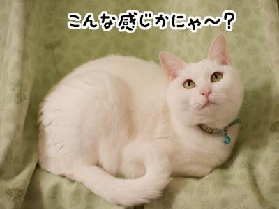 cat1652