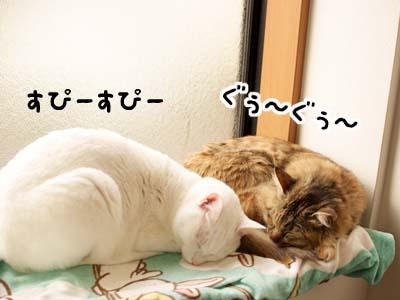 cat1653
