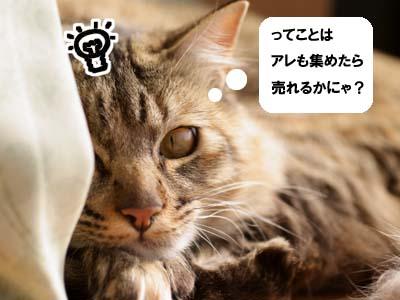 cat1658