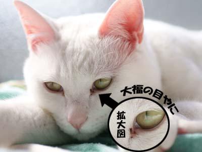 cat1659