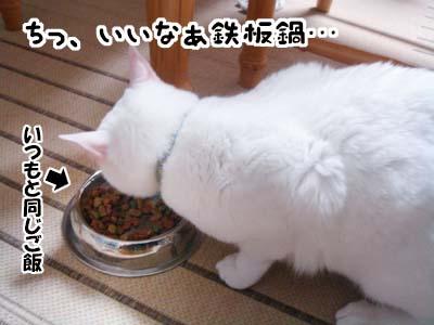 cat1665