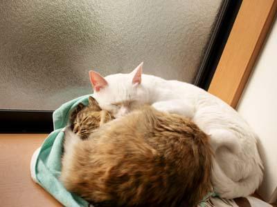 cat1671