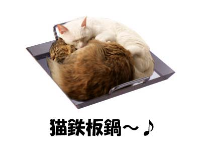 cat1673