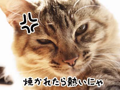 cat1674