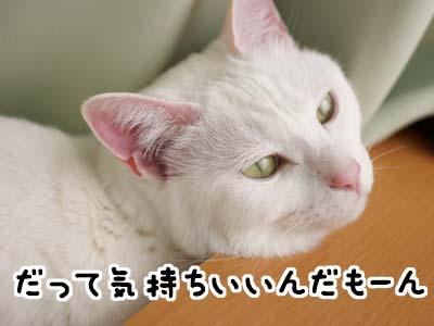 cat1677