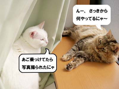 cat1678