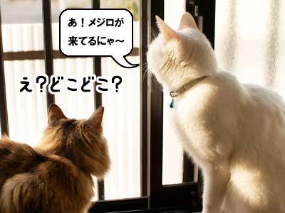 cat1683