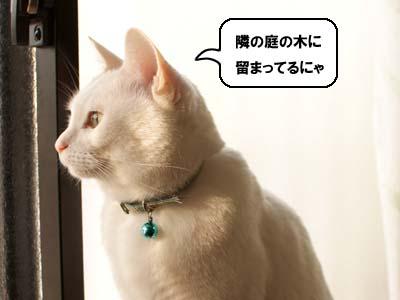 cat1684