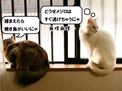 cat1686