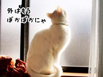 cat1691