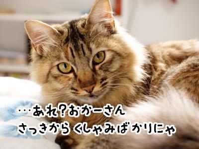 cat1692