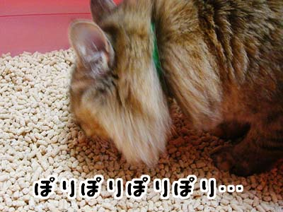 cat1694