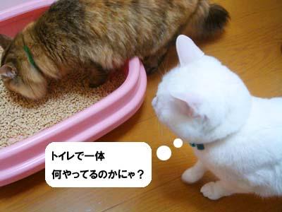 cat1695