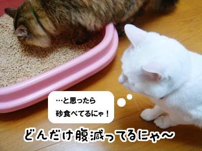 cat1696