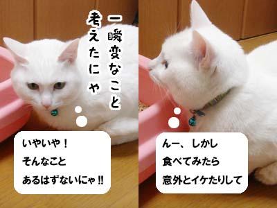 cat1698