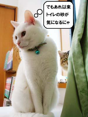 cat1699