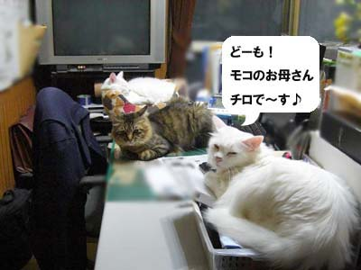 cat1700
