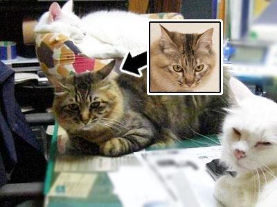 cat1701